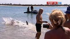 Turista 'herói' segura tubarão pela cauda - BBC Brasil - Vídeos e Fotos