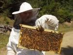 Εκπαίδευση των Μελισσοκόμων της Δράμας από το Κέντρο «ΔΗΜΗΤΡΑ ...