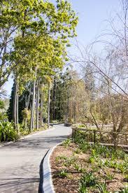 Brisbane City Botanic Gardens by Like A Local Brisbane Botanic Gardens U2013 Wander Full