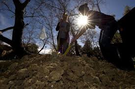 Soil will absorb less atmospheric carbon than expected this