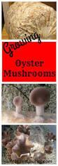 Mushroom Home Decor 198 Best Cool Truffles Mushrooms Images On Pinterest Growing