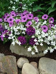 116 best images about container gardening on pinterest bearded