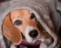 Futter? - Bild \u0026amp; Foto von Torsten Barthel aus Hunde - Fotografie ... - Futter-a22970003