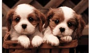 שני כלבים חמודים כמו שני אחיות חמודות