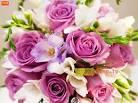 ดอกไม้นานาชนิด no.4022 Wallpaper Download