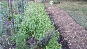 Manure For Vegetable Garden by Green Manure Crops Growing Tips For Your Organic Vegetable Garden