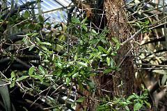 Glosario y propiedades mágicas de las plantas Images?q=tbn:ANd9GcQhMSqbyvi6Cs6OZWd8sagaa49sgiCVyMKv6eIROmKYxh_rbnQv