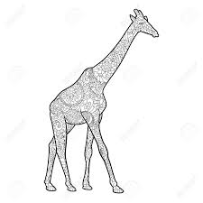 giraffe coloring book for adults vector illustration anti stress