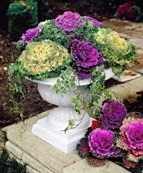 the 25 best winter container gardening ideas on pinterest