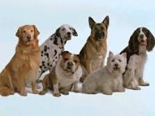 megapost:Haz a tu perro campeon del mundo