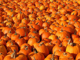 halloween pumpkin wallpapers halloween pumpkin wallpaper nature and landscape wallpaper better