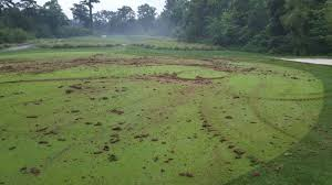 Backyard Golf Hole by Mark Wahlberg U0027s Backyard Golf Practice Area Is Incredible I Love