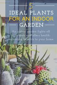 5 of the best plants for your indoor garden