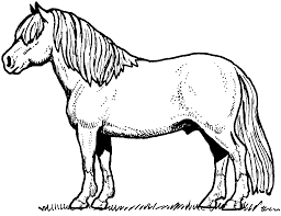 coloring pages horses 3007 1627 1250 coloring books download