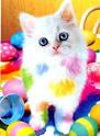 اجمل قطه  Images?q=tbn:ANd9GcQlStzkjpn4y7ALI13RzMDsHeskjDeJ3jrpfkHN8P_hGn3m0BogiUpu8FY