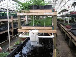 Die Besten  Tilapia Fischzucht Ideen Auf Pinterest Fischzucht - Backyard aquaponics system design