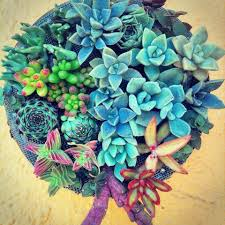 the best mexican succulents for a spectacular home garden u2013 my