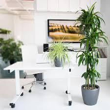 Office Desk Plants by Dracaena Lisa Plant Delivery Shop Lisa U0027s Online My City Plants