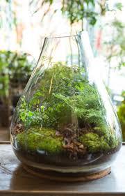 Best Office Desk Plants Best 25 Terrarium Plants For Sale Ideas On Pinterest Terrarium