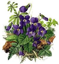 rêve 2..la violette Images?q=tbn:ANd9GcQmGR3oZ5dHDJNdYtYAtCaSBd0HAtvoG17J9_3ErxZE4326V93a