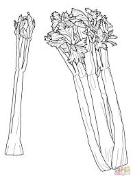 celery coloring pages free coloring pages