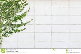 garden design garden design with white wall with a climbing plant
