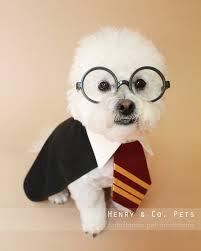 Dog Costumes Halloween Harry Potter Dog Costume Halloween Dog Costume Halloween Pet