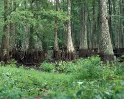 Bayou Cocodrie National Wildlife Refuge
