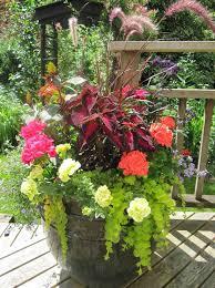 133 best container gardening images on pinterest pots gardening