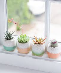 45 creative diy cactus planters you should copy right now cacti
