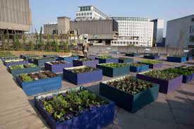 Rooftop Garden Ideas A Blue Wooden Raised Garden Bed Beautified With Various Green