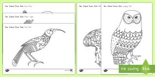 zealand extinct birds mindfulness colouring pages