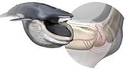 Cientistas descobrem mecanismo que coordena abertura da boca ...