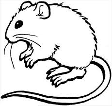 brown rat coloring rat coloring pages kangaroo rat