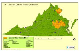 Map Of Virginia Counties And Cities by Thousand Cankers Disease Tcd In Virginia