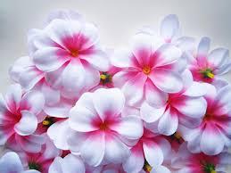 Floral Arrangement Supplies by Silk Flower Supplies Sheilahight Decorations