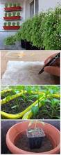 Vertical Garden Vegetables by 287 Best Gardening Images On Pinterest Plants Projects And