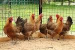 Zwierzęta :: Agroturystyka mazowieckie