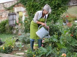 starting a vegetable garden saga