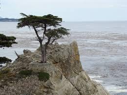 [Super Xịn] Bạn thuộc loại cây gì và bạn là người thế nào? Images?q=tbn:ANd9GcQrYlt6pLiD26C9Aomrm4JjbJH5IY5Ho5cOoennU29GGfkk0tY1