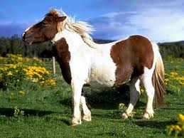 Udomi jednog od konja! - Page 6 Images?q=tbn:ANd9GcQsXwtWpJrKKld6JoyiDKk8RS9IgWu980X57sdeUOG41a7lGHRSHw