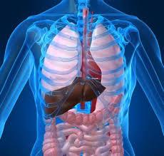 التخلص من سموم الجسم الضارة images?q=tbn:ANd9GcQ