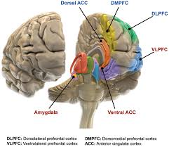 Frontiers   Integrated Neurobiology of Bipolar Disorder   Mood and     Frontiers