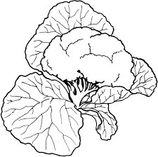 colouring pictures vegetables vegetables coloring pictures for