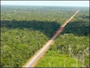 BBC Brasil - Notícias - Asfalto na Floresta: A história da BR-319 na ...
