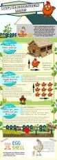backyard chickens for sale 93 best byc infographics images on pinterest raising chickens
