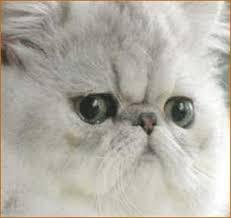 صور قطط تدحك,صور قطط,صور قطط جميلة,صور قطط حلوه Images?q=tbn:ANd9GcQvJtVNmHsgBD0046e93DGVnCCI7dQ3jTW5eJQf92YwFCttb2dI