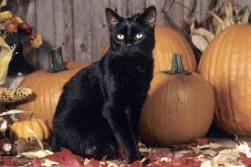 halloween pumpkin wallpapers halloween black cat pumpkin wallpaper