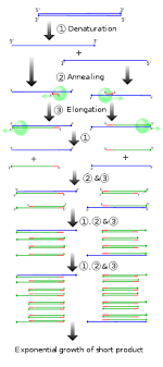 Molecular anthropology   Wikipedia