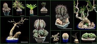 Succulents Pots For Sale by Succulent Caudiciforms For Sale